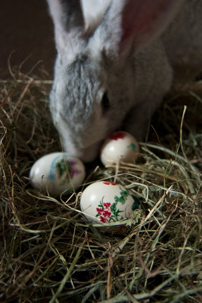 Der Osterhase ist in der Tradition von Ostern fest verankert